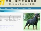 k9俱乐部犬只血统认证落户乌鲁木齐