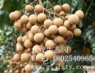 深圳观澜九龙生态园,深圳山林中的农家体验好去处