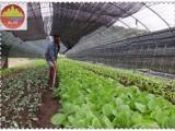 北京优质的环保盖土网 防尘网 遮阳网3针