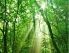 林地,绿色