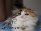 纯正漂亮的折耳猫 颜色多选 包健康 送用