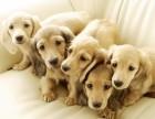 冬季狗狗体味重又带电无法亲近怎么办?有它全部搞定