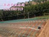 供应新型蔬菜大棚骨架机 大跨度大棚