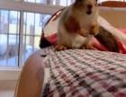 北京哪里有卖松鼠的,北京魔王松鼠多少钱一只
