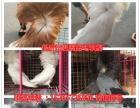 常年出售:肉鸽品种:美国落地王鸽、白羽王鸽、卡努鸽、球型鸽、