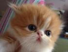 家养猫猫生的,价格可谈
