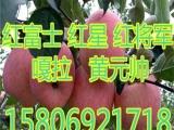 北京红富士苹果价格.,.,.,3E