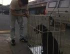重庆机场宠物托运不看广告,看疗效