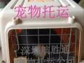 国内宠物托运,国际宠物托运,香港澳门宠物托运当天达