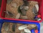 出售魔王松鼠,非迷刺猬等异宠