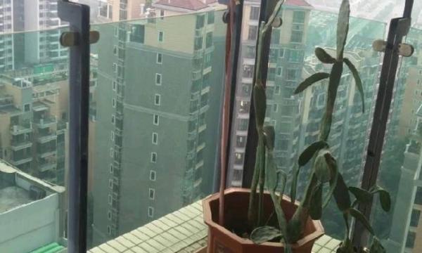 中天3期 高楼层精装3房 未入住过 家私电器齐全!