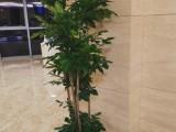 昌平办公室绿植租赁,花卉租赁