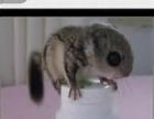 伶俐可爱小松鼠等着你抱回家