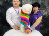 廣州寵物美容培訓學校 名師授課專業指導