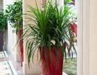 福州专业绿植租赁选爱之伴花艺园花卉租摆各种盆栽零售别墅绿化