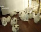 宠物猫批发零售,全国宠物猫一手货源