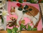 黄浦区南路宠物火化宠物殡葬上海市宠物火化中心电话