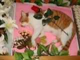 上海寵物火化寵物殯葬動物火化寵物安樂上海寵物火化電話