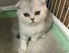 猫舍出售银渐层 蓝猫 加菲猫 金吉拉保障健康