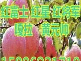 山东红富士苹果价格,,,,,,15h