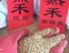 辽宁省早熟禾种子