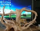 杜鹃根 沉木 鱼缸 雨林 草缸 水族 造景 树根