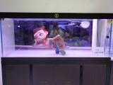 洛阳名亨水族定制款超白玻璃鱼缸大型客厅水族箱