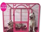 闲置大型宠物犬狗笼
