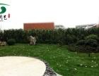 静安区 西康路 仿真花、绿植墙、垂直绿化、庭院景观
