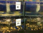 专业制作加工酒店超市海鲜池家庭鱼缸等