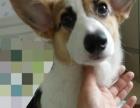 超低价家庭宠物寄养宠物寄养寄养服务签订寄养协议