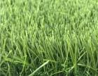 生產定制足球場人造草坪 幼兒園人工草坪