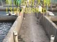 河南鱼苗市场价格鲤鱼苗啥价草鱼苗价格是多少