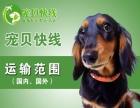 国内国外专业宠物托运
