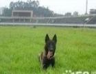 狗狗不听话就找宠乐训练,规模大,正规信用,昆明训犬