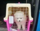宠物托运航空铁路汽运(全国连锁 上门接宠,宠物运输保险)
