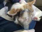 芦台济源动物诊所CCCA宠物医院