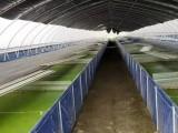 湖北明蛭水产科学研究院水蛭养殖技术培训