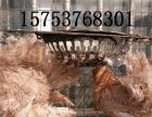 安庆出售元宝鸽肉鸽毛领熊猫金鱼燕子摩登那皇冠大鼻子凤尾等观赏