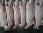 北仑羊肉批发,北仑批发羊肉,北仑羊肉批发市场在哪里