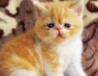 舍长推荐可爱呆萌加菲猫 签协议 售后保障
