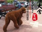 泉州哪里有卖巨贵犬的