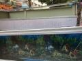 超薄侧过滤鱼缸特价出售