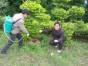 园洲防治白蚁公司 石湾白蚁防治中心 福田防治白蚁所,技术精湛