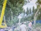 北京专业修树伐树移树公司