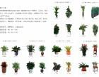北京园林养护绿植租摆 价格合理 优惠进行中