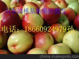 台湾126油桃种植基地 山东大棚油桃上市了\今日大棚油桃价格