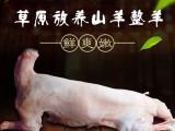 鄂尔多斯鄂托克 阿尔巴斯山地草原放养山羊肉一整只预售