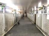 独立单间犬舍 超大面积跑笼 宠物寄养