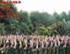 河南专业拓展训练 体验式内训 野外求生